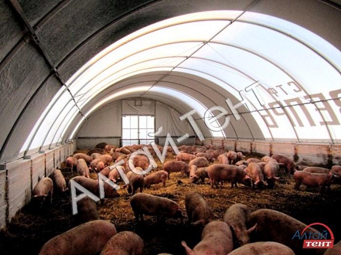 Просторный тентовый ангар для свиноводства