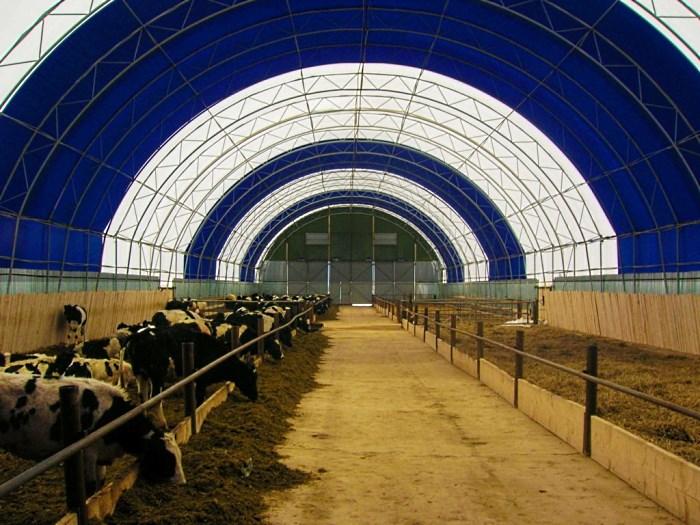 Привязное содержание коров в индивидуальных стойлах для каждого животного